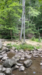 Photo of two trees near a rocky river shoreline in Cunningham Falls State Park